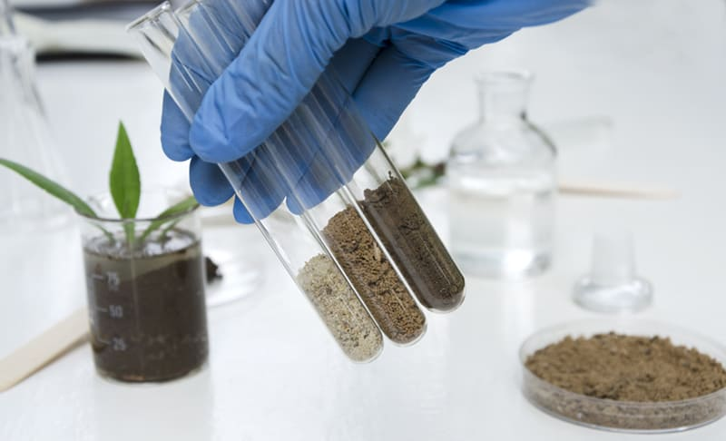 Laboratory assistant holding glass tubes of sand, black soil and clay befor testing them